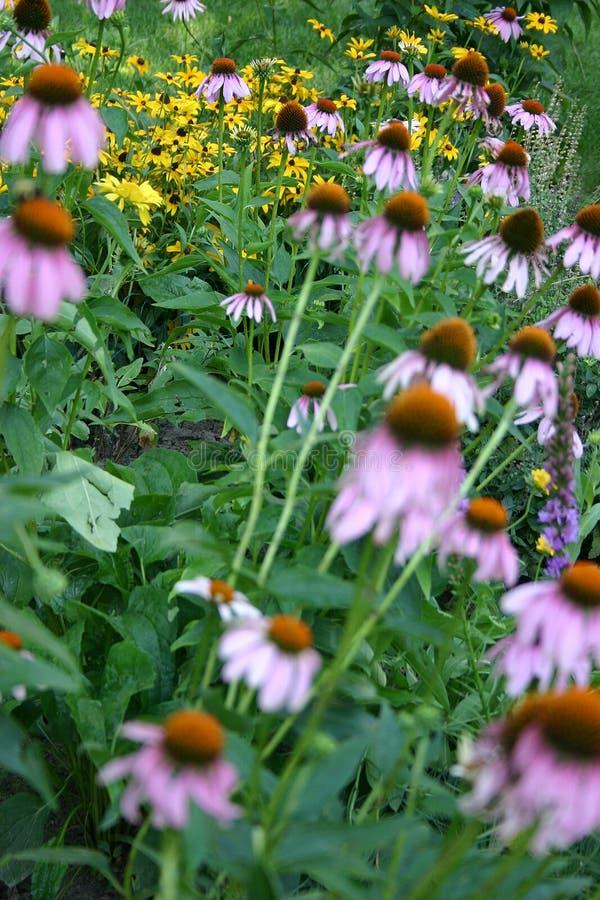Download 域花 库存图片. 图片 包括有 叶子, 黄色, coneflower, 户外, 生活, 本质, 绿色, 夏天 - 192279