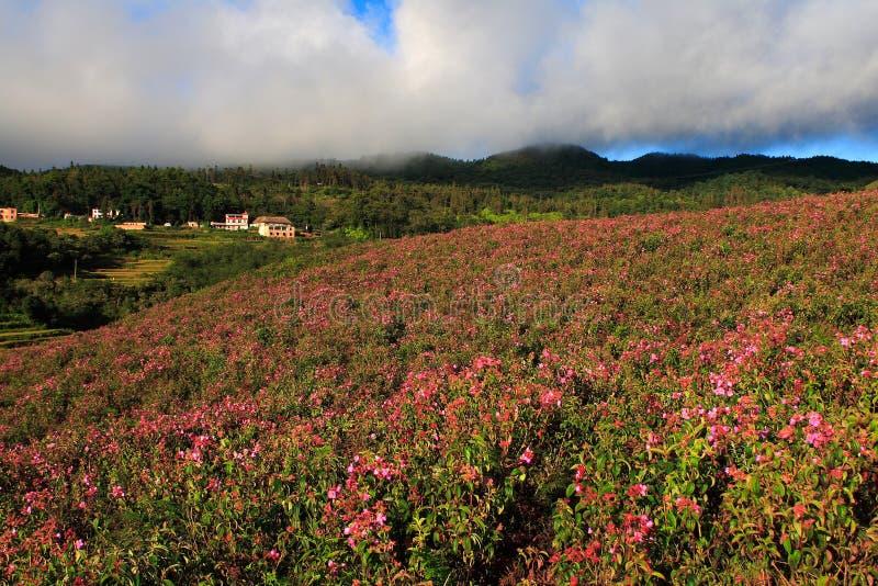 Download 域花 库存照片. 图片 包括有 夜间, 有雾, 日出, 阳光, 云南, 和平, 早晨, 村庄, 夏天, 红色 - 3657354