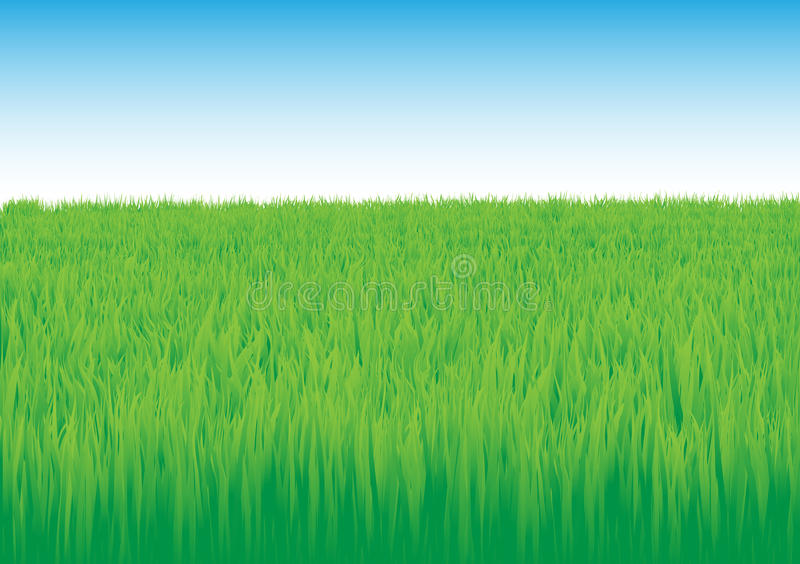 域草 向量例证