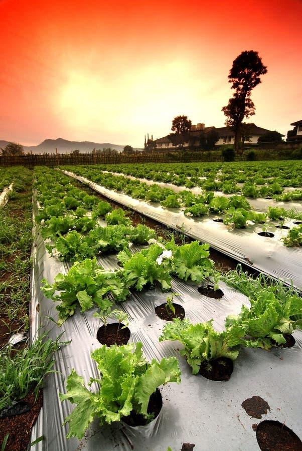 域蔬菜 库存照片