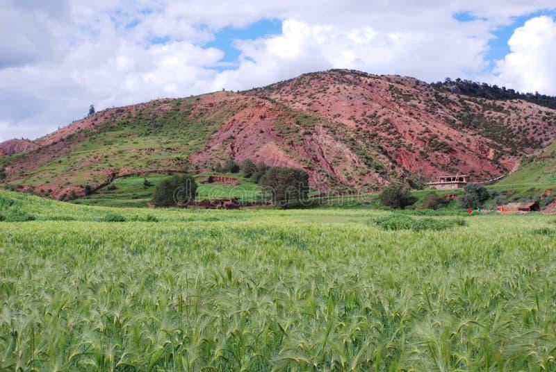域西藏人村庄 库存图片