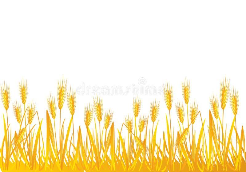 域麦子 库存例证