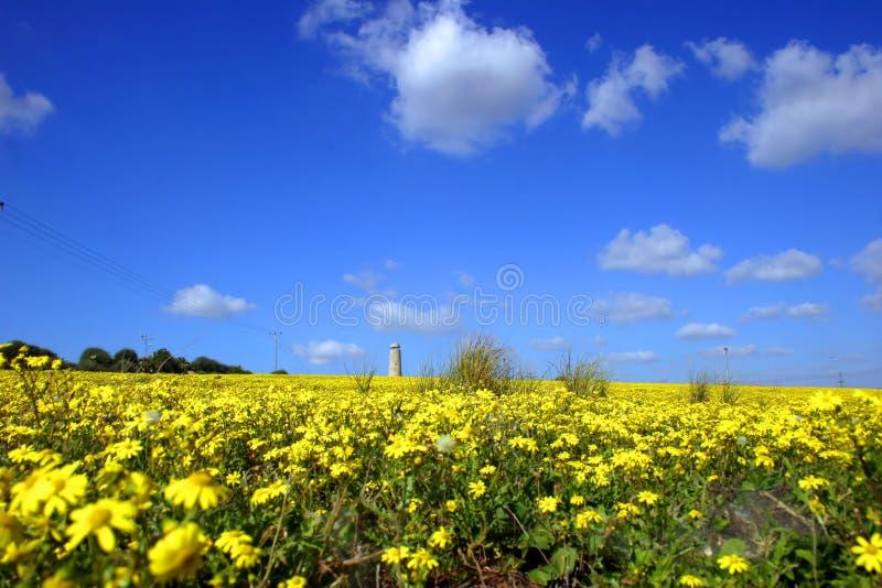 域黄色 免版税库存图片