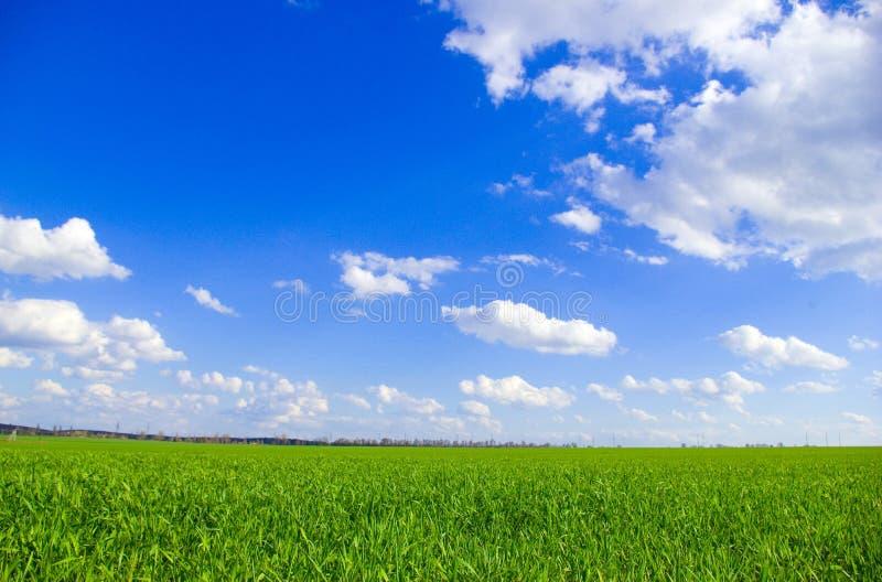 域sky 库存照片