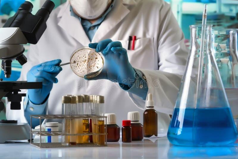 培养培养皿丝毫接种的科学家手使成环  库存照片