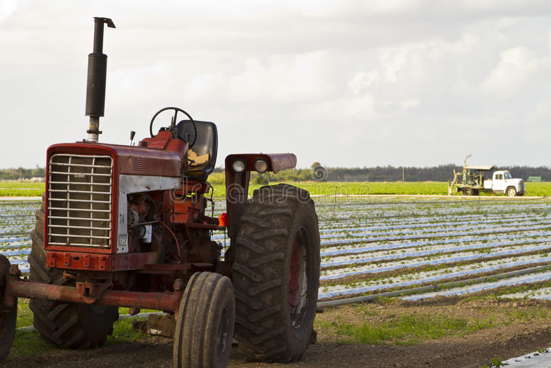 培养的地产olf拖拉机葡萄酒 库存照片