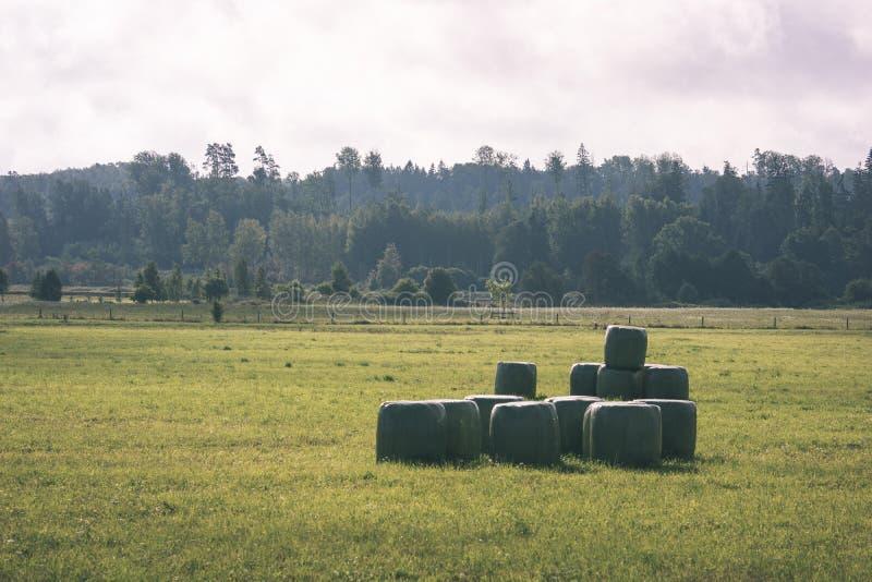 培养的麦田在夏天-葡萄酒减速火箭的神色 图库摄影