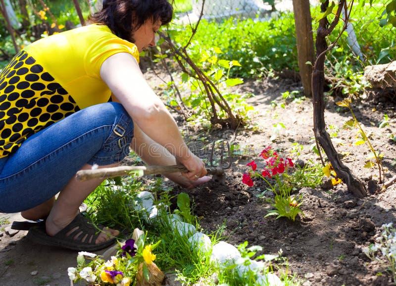 培养花从事园艺一名妇女 免版税库存图片