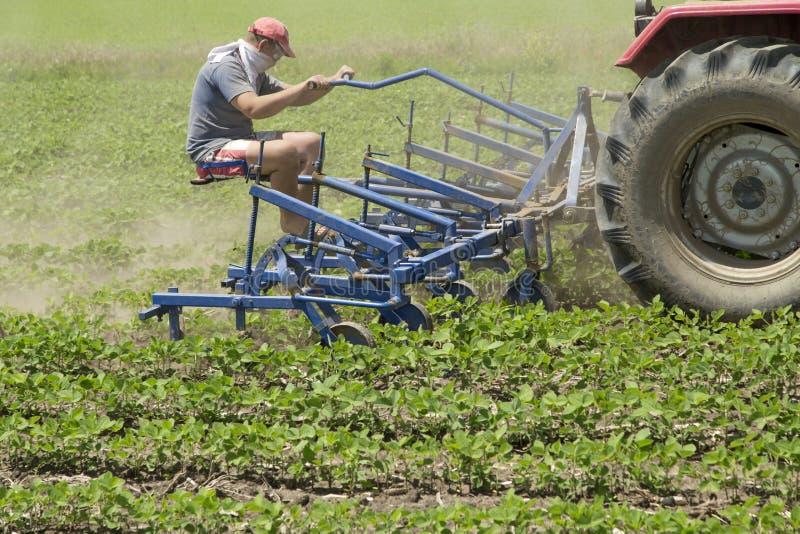 培养年轻大豆的领域播种与中耕作物耕地机机器 图库摄影
