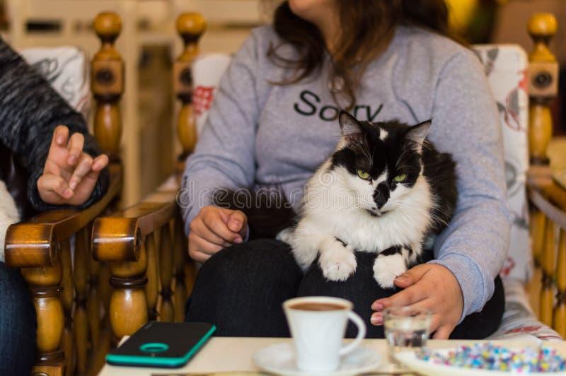 基于在咖啡馆的女孩的膝部的黑白猫 图库摄影