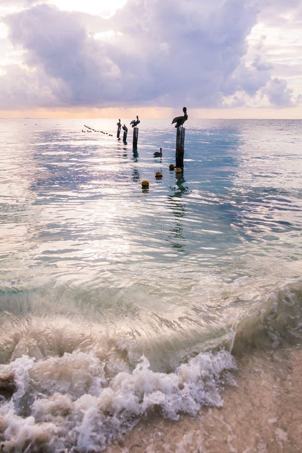 基于在镇静加勒比S的木停泊柱子的鹈鹕 图库摄影