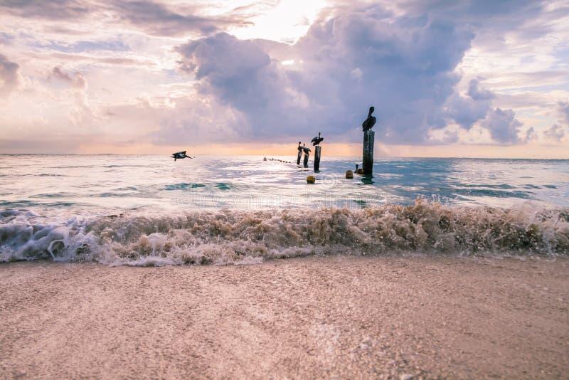 基于在镇静加勒比S的木停泊柱子的鹈鹕 免版税库存照片
