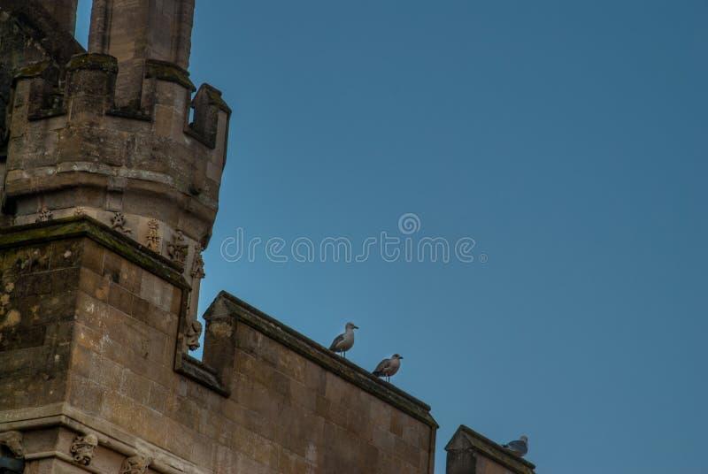 基于城堡塔的鸽子 库存图片