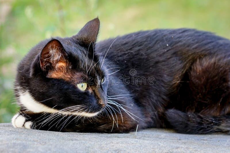 基于太阳的国家猫温暖了石头 免版税库存图片