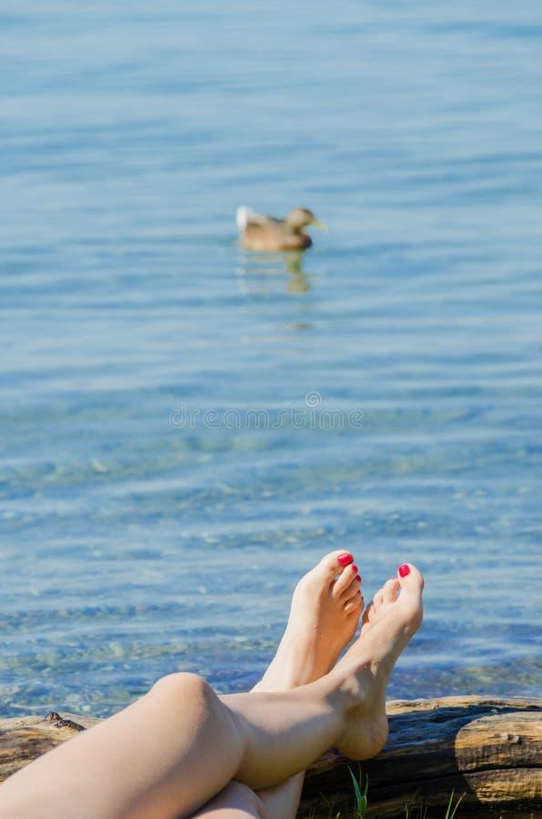 基于有鸭子的江边的女性腿 库存图片