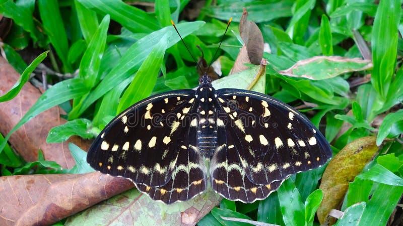 基于草的蝴蝶 免版税图库摄影