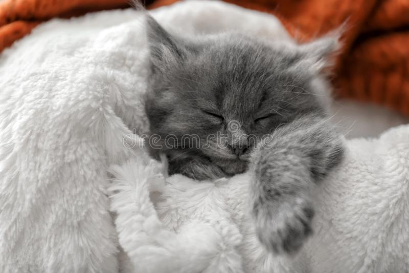 基于软的格子花呢披肩的逗人喜爱的小的小猫 免版税图库摄影