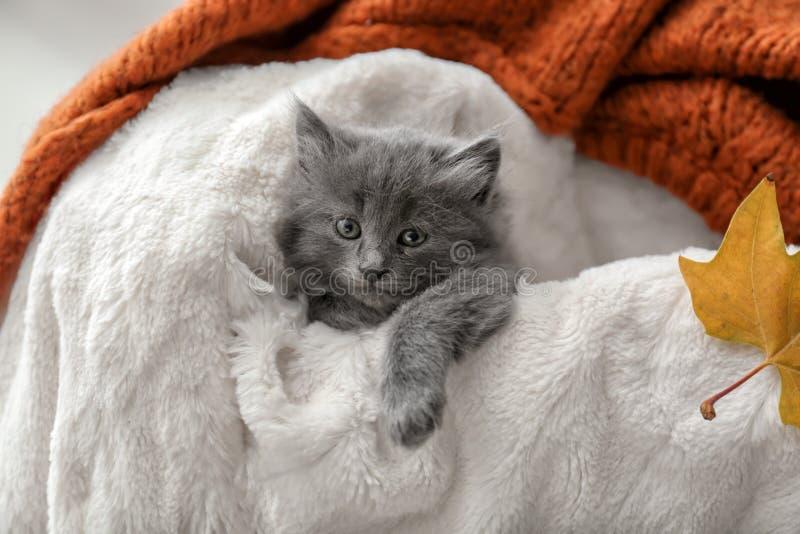 基于软的格子花呢披肩的逗人喜爱的小的小猫 库存图片