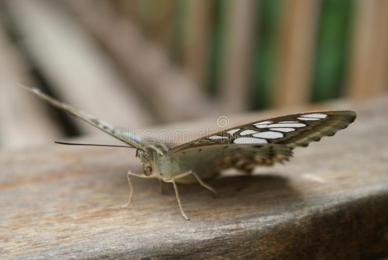 基于长凳的蝴蝶 免版税库存图片