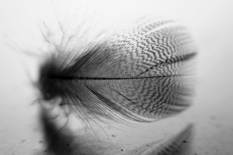 基于玻璃的小羽毛 库存照片