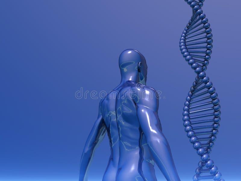 基因 向量例证