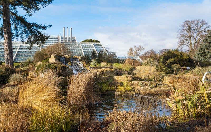 基奥庭院的假山花园在冬天/秋天 免版税库存照片