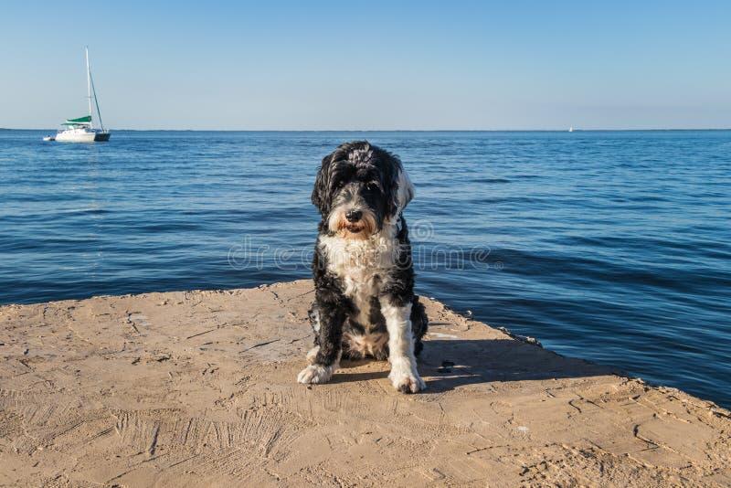 基拉戈码头的狗 图库摄影