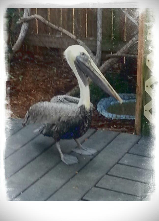 基拉戈鸟类保护区 库存照片