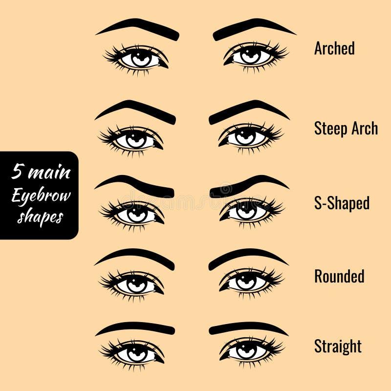 基本的眼眉形状键入传染媒介例证 库存例证