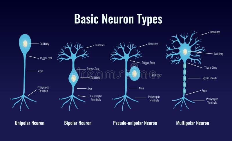 基本的神经元键入构成 库存例证