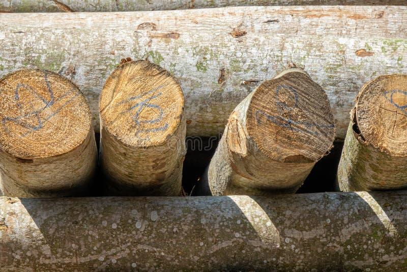 堆上的树干 图库摄影