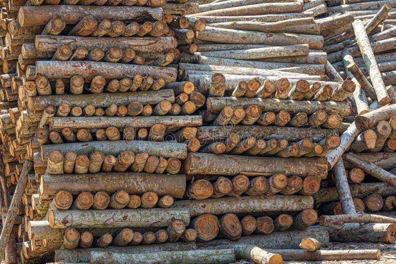 堆上的树干 免版税图库摄影