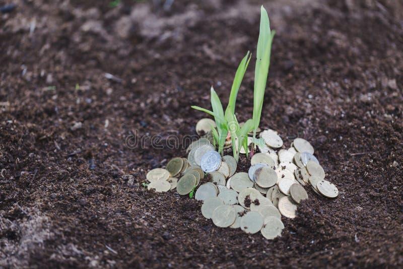 堆与植物的硬币在事务的,现金上涨萨文上面 图库摄影