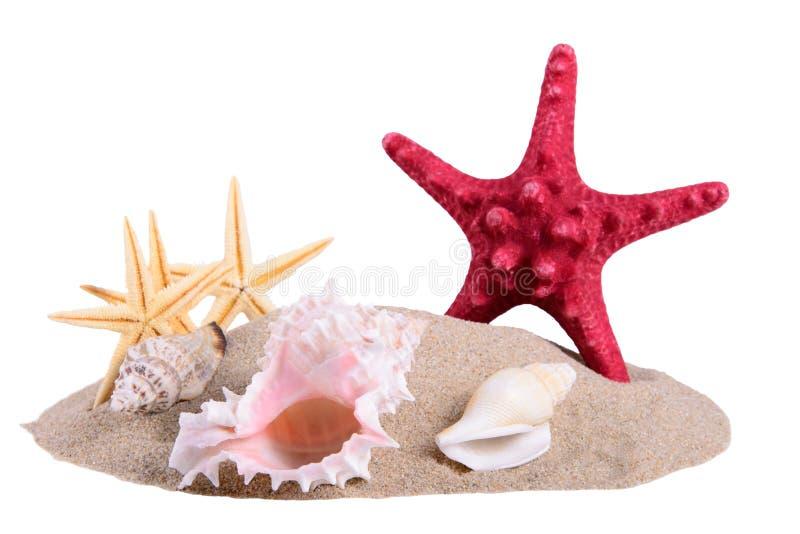 堆与贝壳和海星的沙子 免版税库存图片