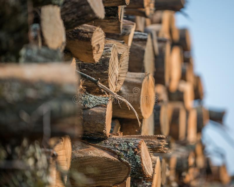 堆从州长诺尔斯状态森林的被堆积的被采伐的树在威斯康辛北部- DNR有是harveste的运作的森林 库存图片