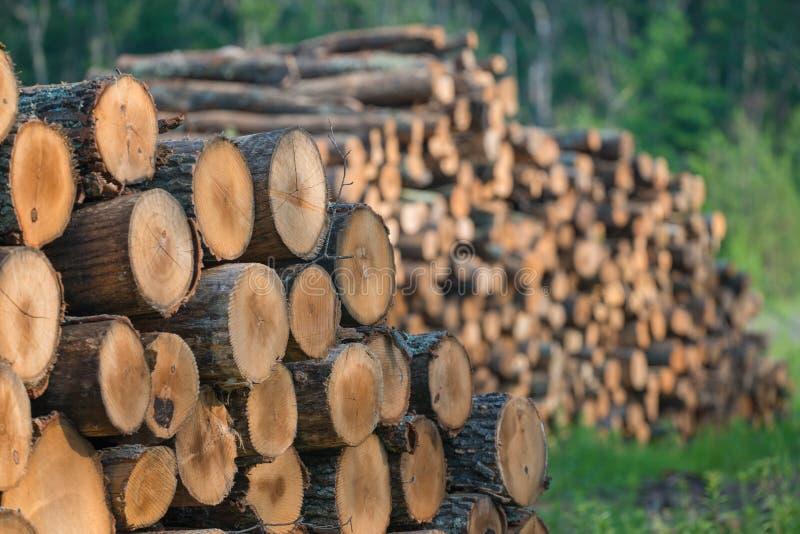 堆从州长诺尔斯状态森林的被堆积的被采伐的树在威斯康辛北部- DNR有是harveste的运作的森林 免版税库存图片