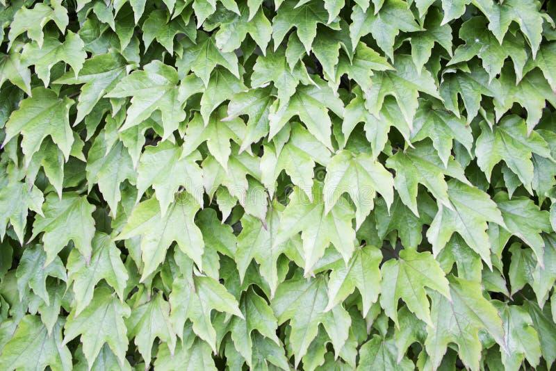 堆叶子 图库摄影