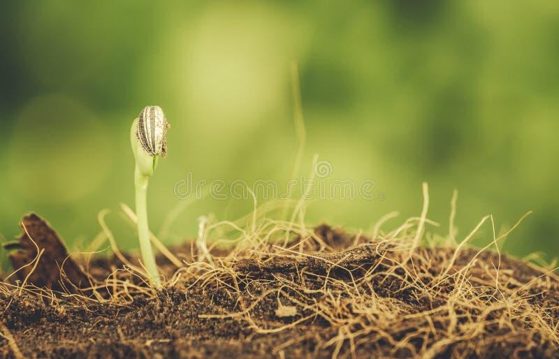 堆土壤的小植物 免版税库存图片