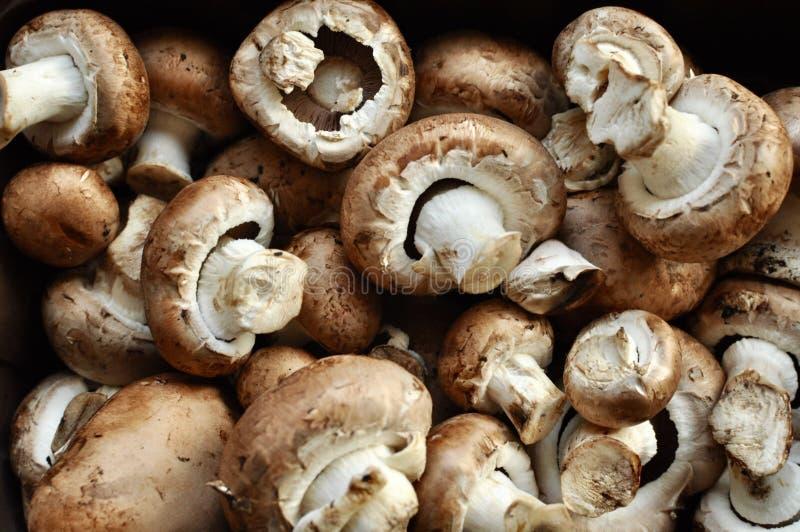 堆土质栗子蘑菇 免版税库存照片