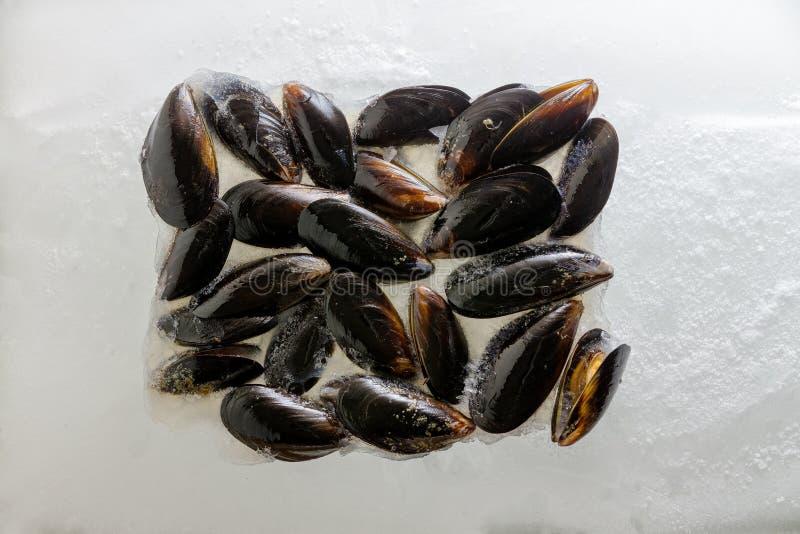 堆在他们的壳的新鲜的淡菜 免版税图库摄影