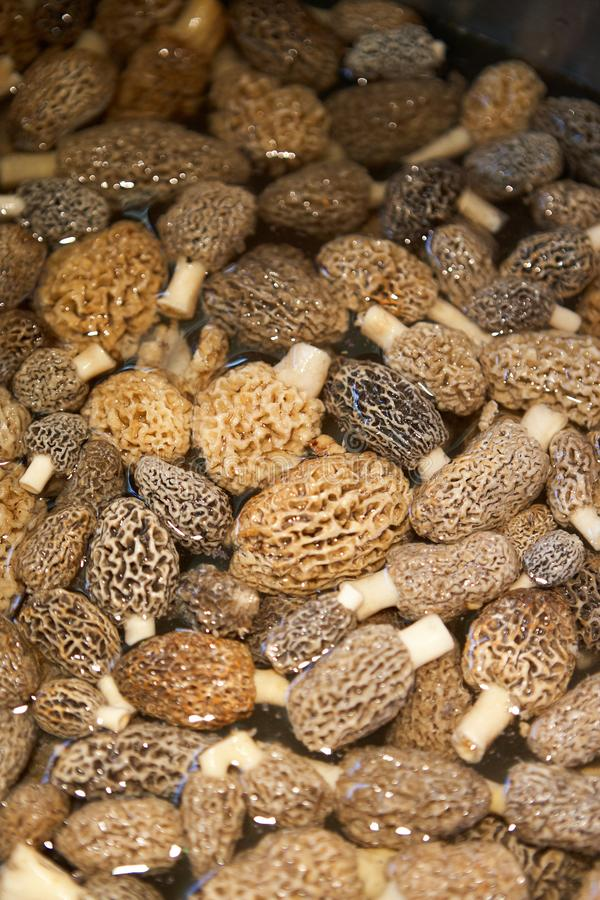 堆在关闭的被采摘的可食的蘑菇  库存图片