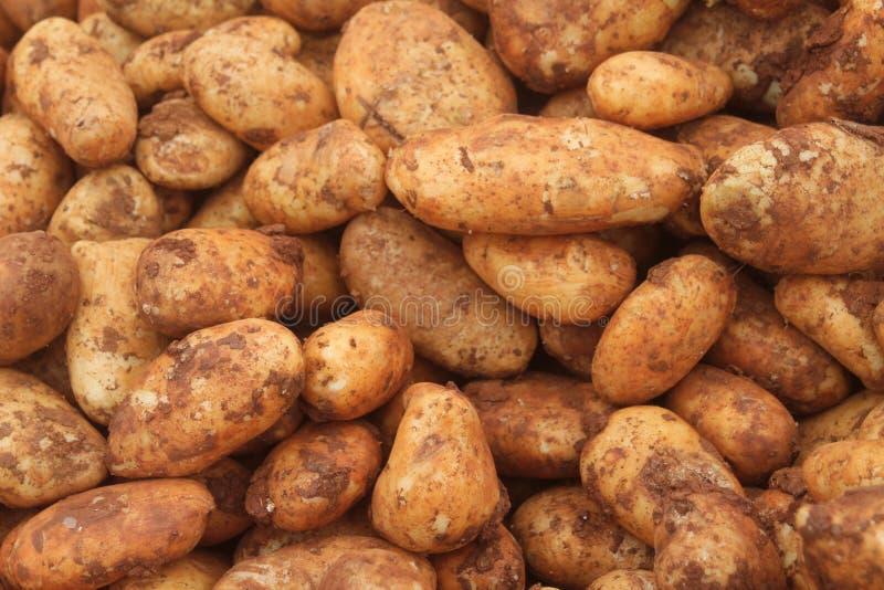 堆在土壤的未加工的土豆 免版税库存照片