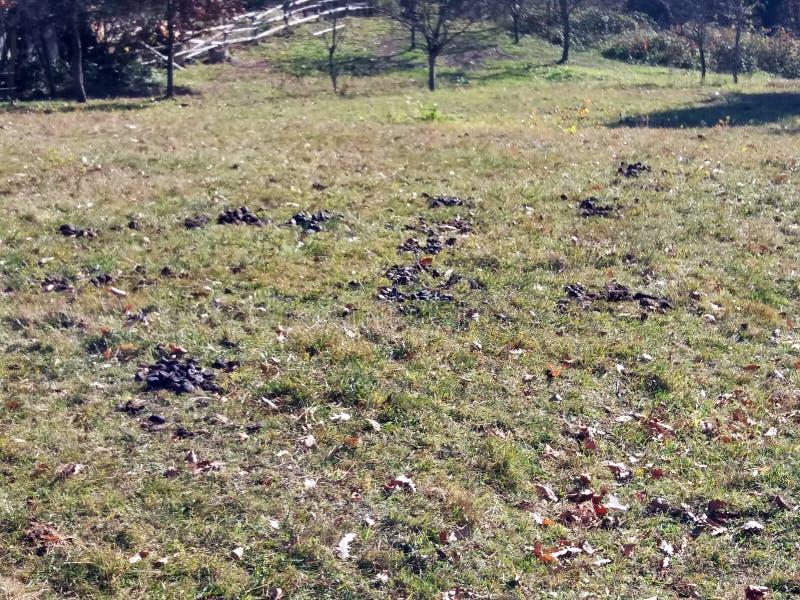 堆在小绿草的新鲜的马粪 免版税库存图片