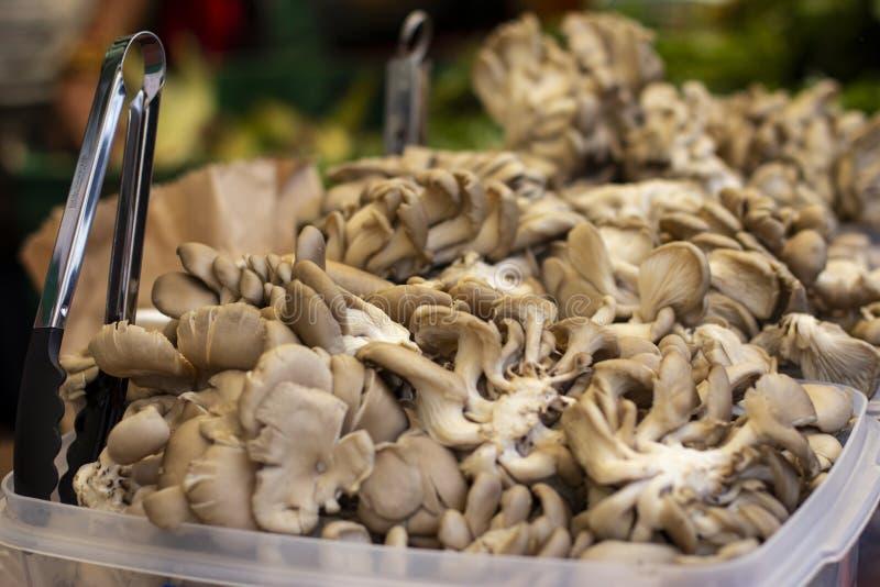 堆在显示的蚝蘑在市场上 库存照片