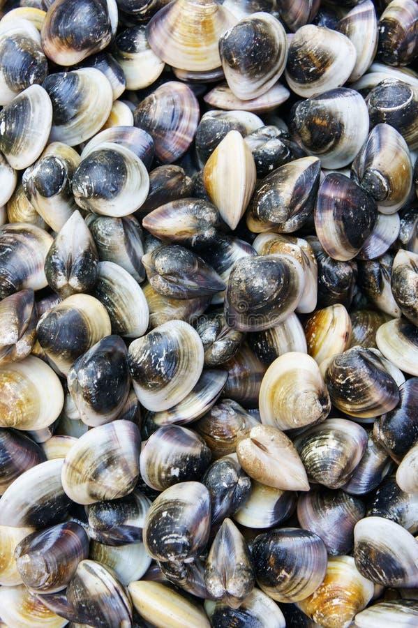 堆在鱼市跳船的新鲜的海蛤蜊 对海鲜,食物,厨房 库存照片