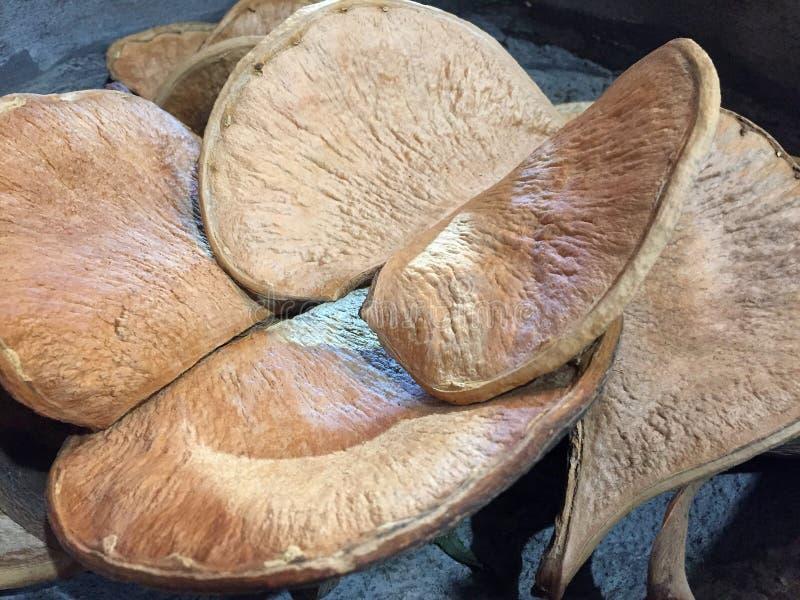堆坚硬干真菌 免版税库存照片