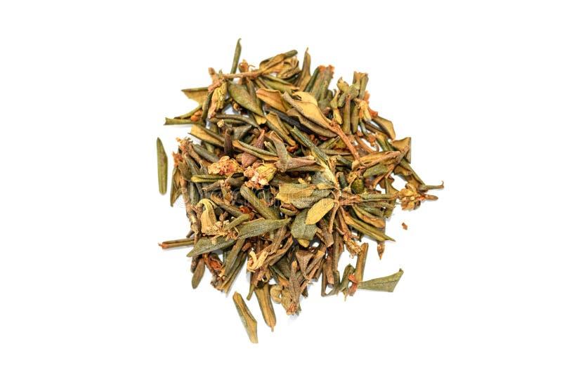 堆干杜鹃花Adamsii,茶的萨根dyilya 库存图片