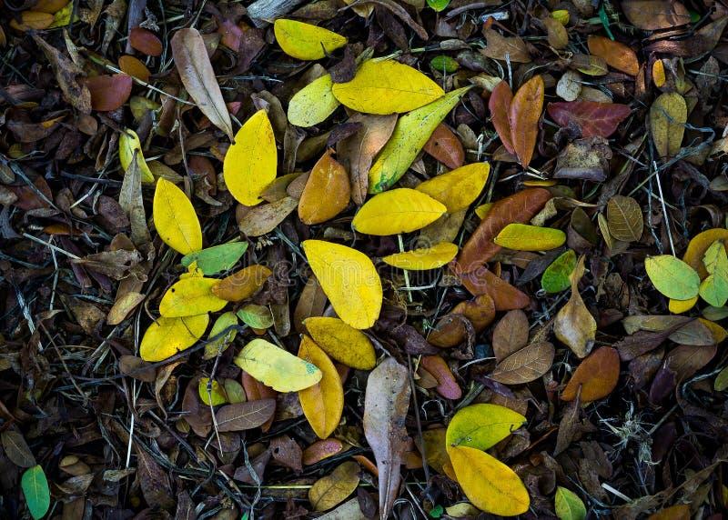 堆干燥叶子在秋天 免版税库存图片