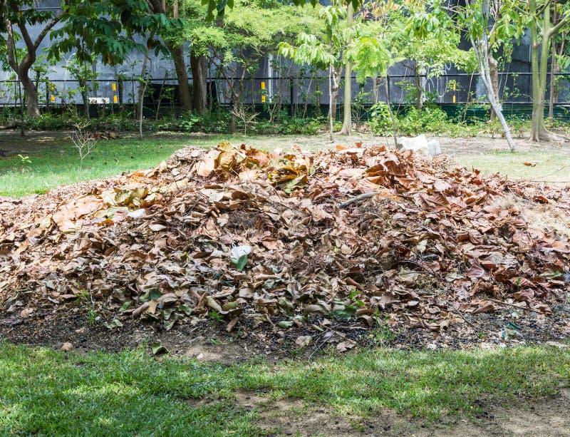 堆干燥叶子 免版税库存照片