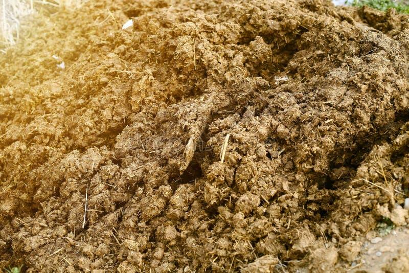堆庄稼萌芽的泥 免版税库存照片